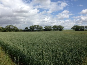 Arable land to rent