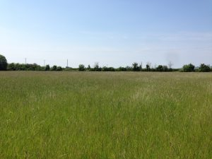Land at Willersey Road, Badsey - rural and equestrian property