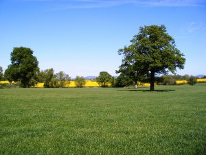 Countryside Stewardship