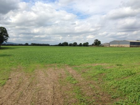 113 acres at Moreton Valence